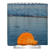 Scallop Seashell On The Beach Shower Curtain