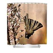 Scarce Swallowtail Feeding Shower Curtain