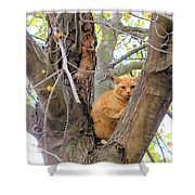Scared Up A Tree Shower Curtain