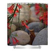 Scarlet Bugler Blossoms On Rocks Shower Curtain