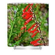 Scarlet Bugler In Rancho Santa Ana Botanic Garden In Claremont-californi Shower Curtain