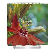 Scarlet Flame Passiflora  Shower Curtain