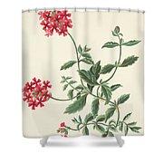 Scarlet Flowered Vervain Shower Curtain