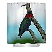 Scarlet Gorget - Ruby-throated Hummingbird Shower Curtain