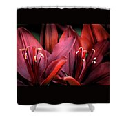 Scarlet Lilies Shower Curtain