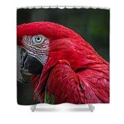 Scarlet Macaw Shower Curtain by Fabio Giannini