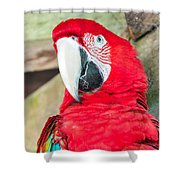 Scarlet Macaw Face Shower Curtain