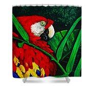 Scarlet Macaw Head Study Shower Curtain