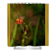 Scarlet Milkweed And Butterfly Shower Curtain