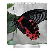Scarlet Mormon Butterfly #2 Shower Curtain