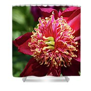 Scarlet Peony Shower Curtain