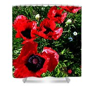 Scarlet Poppies Shower Curtain