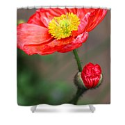 Scarlet Promise Shower Curtain