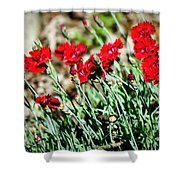 Scarlet Red Dianthus Shower Curtain