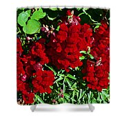 Scarlet Snapdragons At Pilgrim Place In Claremont-california  Shower Curtain