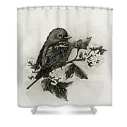 Scarlet Tanager - Black And White Shower Curtain
