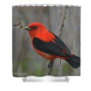 Scarlet Tanager On Stalk Shower Curtain