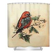 Scarlet Tanager - Vintage Shower Curtain