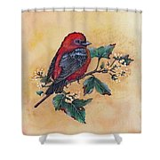 Scarlet Tanager - Acrylic Painting Shower Curtain