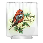 Scarlet Tanager - Summer Season Shower Curtain