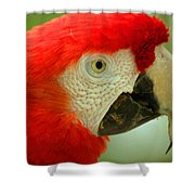 Scarlett Macaw South America Shower Curtain