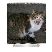 Scary Kitty Shower Curtain