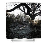 Scattered Sun Rays On The Dunes Shower Curtain