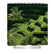 Scenic Valleys With Rice Fields In Bali Shower Curtain