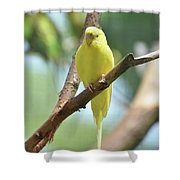 Scenic View Of An Adorable Yellow Parakeet Shower Curtain
