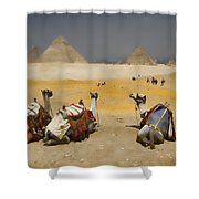 Scenic View Of The Giza Pyramids With Sitting Camels Shower Curtain