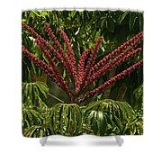 Schefflera Flower Shower Curtain
