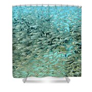 School Of Fish At Kwajalein Atoll Shower Curtain