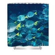 School Of Surgeonfish Cruising Reef Shower Curtain