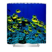Schooling Raccoon Shower Curtain