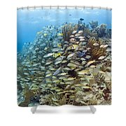 Schools Of Grunts, Snappers, Tangs Shower Curtain by Karen Doody