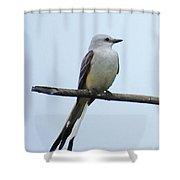 Scissortail Flycatcher Shower Curtain