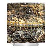 Scolopendra Polymorpha Shower Curtain