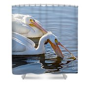 Scooping For Fish Shower Curtain