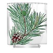 Scots Pine, Pinus Silvestris Shower Curtain