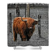 Scottish Highlander Shower Curtain