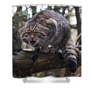 Scottish Wildcat Shower Curtain