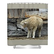 Scratching Board Shower Curtain