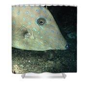 Scrawled Filefish Profile, Alutera Shower Curtain