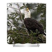 Screamin Eagle Shower Curtain