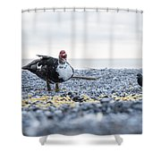 Screaming Duck Shower Curtain