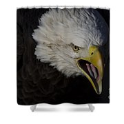 Screaming Eagle Shower Curtain by Andrea Silies