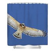 Screaming Hawk Shower Curtain