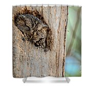 Screech Owl In A Tree Shower Curtain
