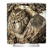 Screech Owl In Cavity Nest Shower Curtain