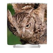 Screech Owl In Flight Shower Curtain
